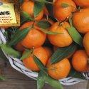 Della frutta, verdura e del pesce da mettere in tavola nel mese di dicembre e di qualche altra curiosità