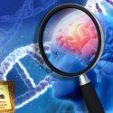 Degli stili di vita consigliati per prevenire  il morbo di Alzheimer e di qualche altra curiosità