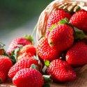 Delle proprietà salutari delle fragole e di qualche altra curiosità, di questo tratteremo nella Rubrica di Venerdì 4 Maggio.