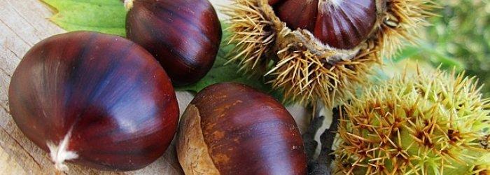 Della frutta e verdura e pesce da mettere in tavola il mese di ottobre